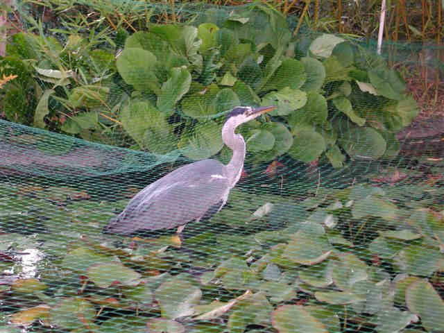 Bassin De Jardin Heron Bassin De Jardin