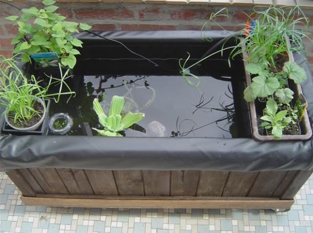 Aquario philrecifal :: Bassin Jardin