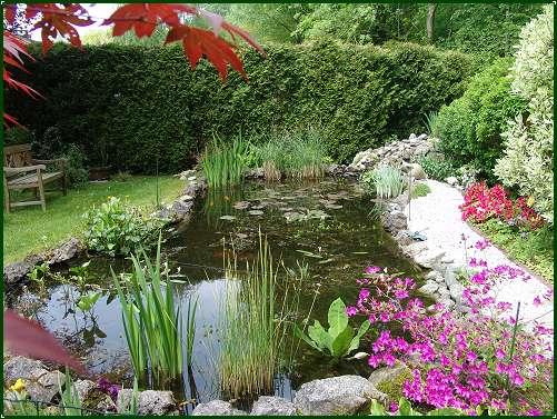 Bassin aquatique virtuel jardin virtuel for Bassin aquatique de jardin
