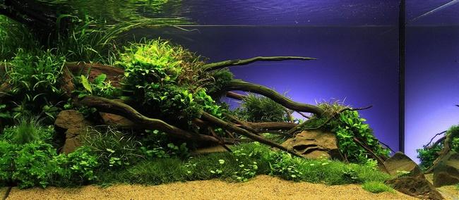 aquascaping ou lart du paysage aquatique en aquarium