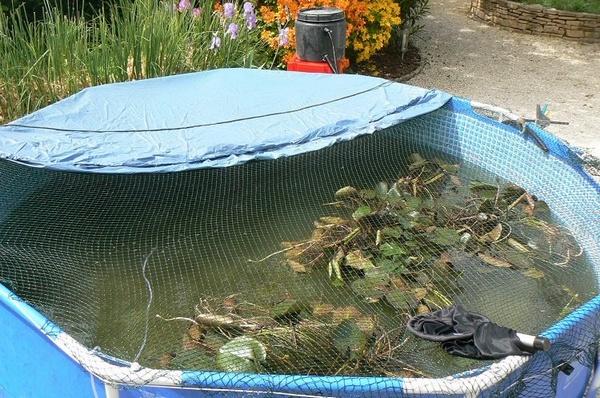 La r novation du bassin d 39 andros for Bache pour bassin a poisson exterieur