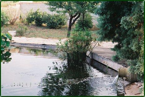 Piscine naturelle famille blanchard - Filtre bassin canard montpellier ...