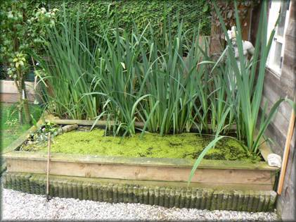 Un bassin aquatique et pourquoi pas des canards - Plantes aquatiques pour petit bassin ...