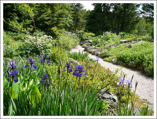 Le jardin d 39 altitude du haut chitelet - Jardin de rocaille et jardin alpin enidees inspirantes ...