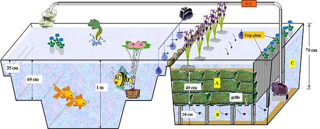 Tout sur le lagunage pour bassin partie 3 3 for Filtre bassin poissons rouges