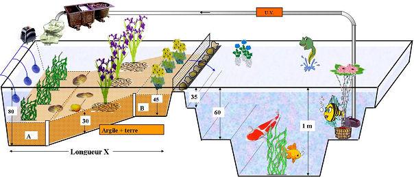 Tout sur le lagunage pour bassin partie 3 3 for Fabriquer un filtre pour bassin