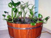 Le jardin d 39 eau en pot ou en demi tonneau - Bassin dans demi tonneau limoges ...