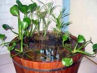 Le jardin d\'eau en pot ou en demi-tonneau