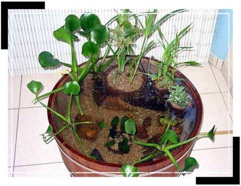 Le jardin d 39 eau en pot ou en demi tonneau - Petit bassin de jardin en plastique nanterre ...