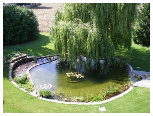 La m tamorphose d 39 un bassin - Plante de bassin filtrante ...