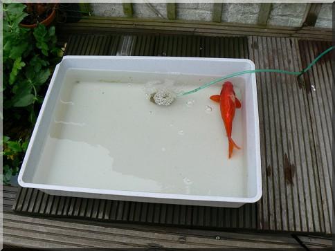 Soigner la blessure d 39 un poisson for Donne poisson pour bassin