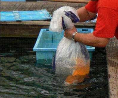 Achat et acclimatation de poissons for Achat carpe