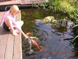 L 39 alimentation de la carpe ko for Entretien bassin poisson rouge