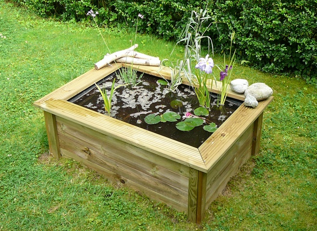 bac plantes aquatiques cadre bois forum jardinature forum jardin jardinage nature. Black Bedroom Furniture Sets. Home Design Ideas